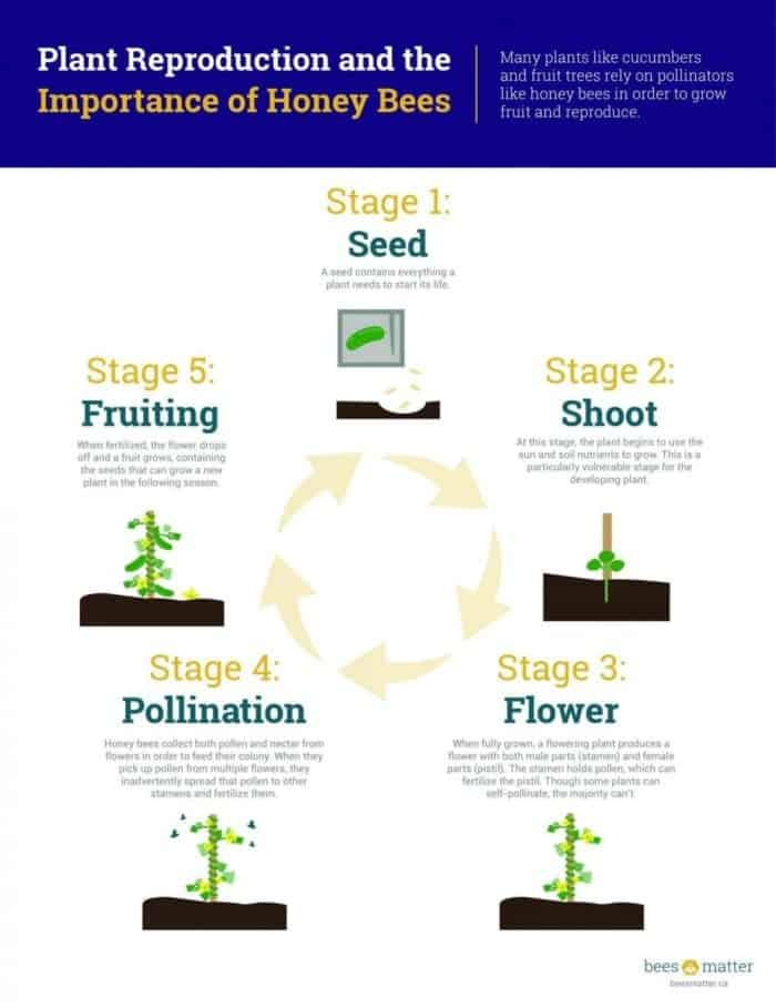 Bees_Matter_Infographics_plant reproduction