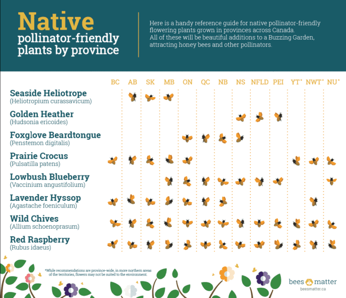 Native Pollinator Flowers_EN