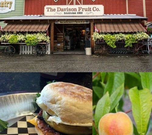 collage photo from Davison Orchards tour