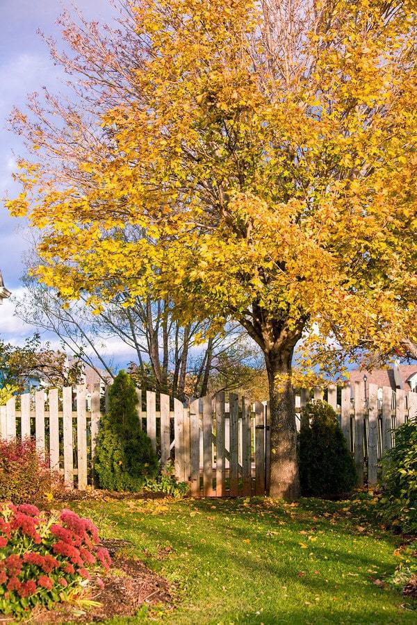 Fall foliage and the entrance to a backyard garden.