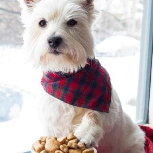 A Bowl with Cinnamon Apple Homemade Dog Treats in front of a dog with red and blue checkered scarf