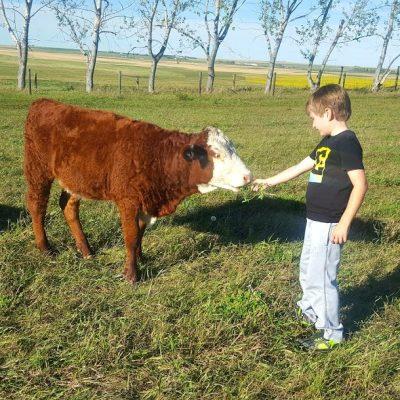 Calf Rescue 2016: Summer Fun