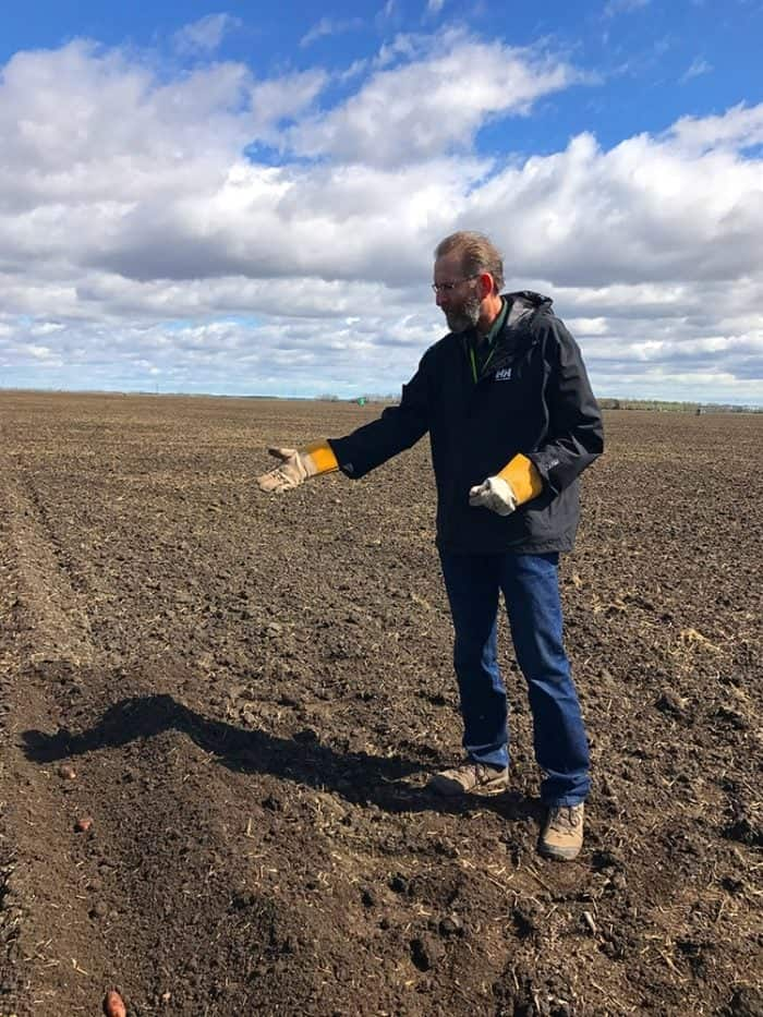 Man showing the uncovered row of planted potatoes