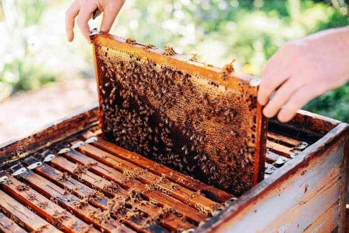 honey bees on hive in wooden box