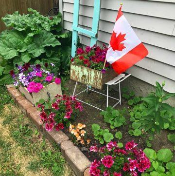 My Blooming, Buzzing Garden Update!