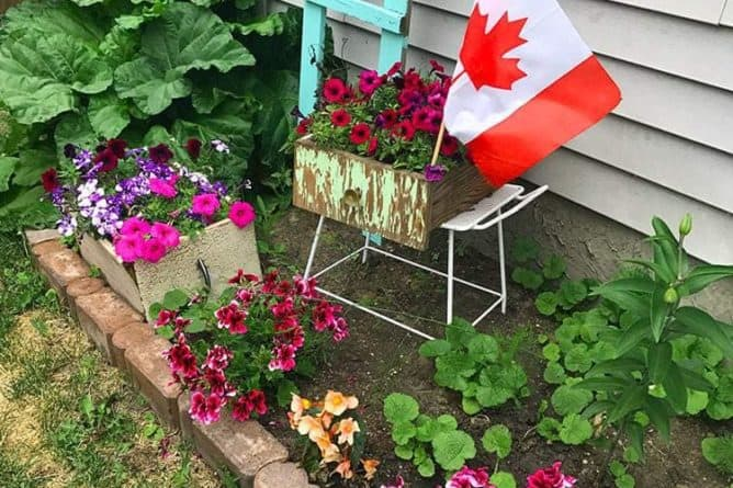 My Blooming, Buzzing Garden witth Canadian flag and wood ladder