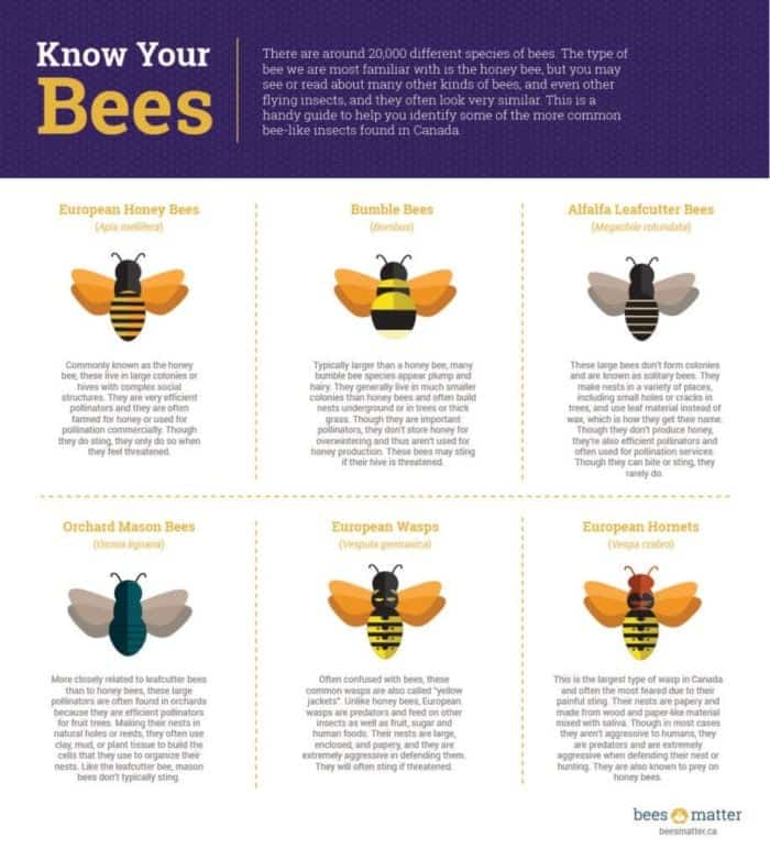 information about bees