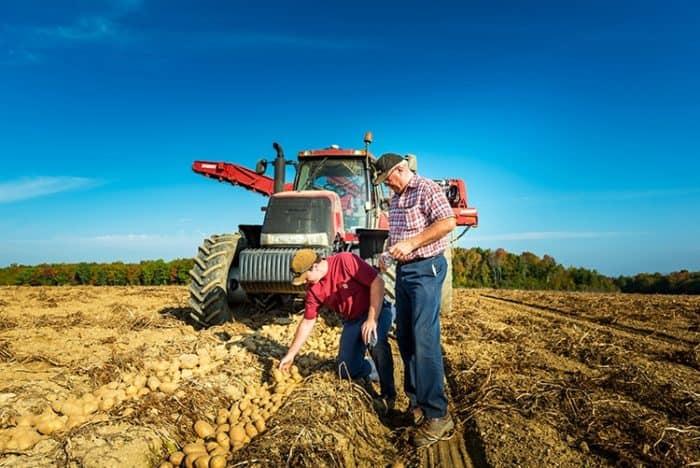 Harvesting Potato with the Farmer Partner