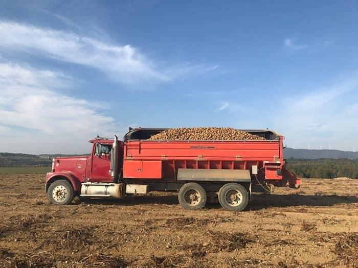 potato truck full of newly harvest potatoes