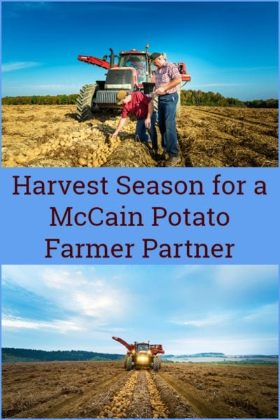 Harvest Season for a McCain Potato Farmer Partner