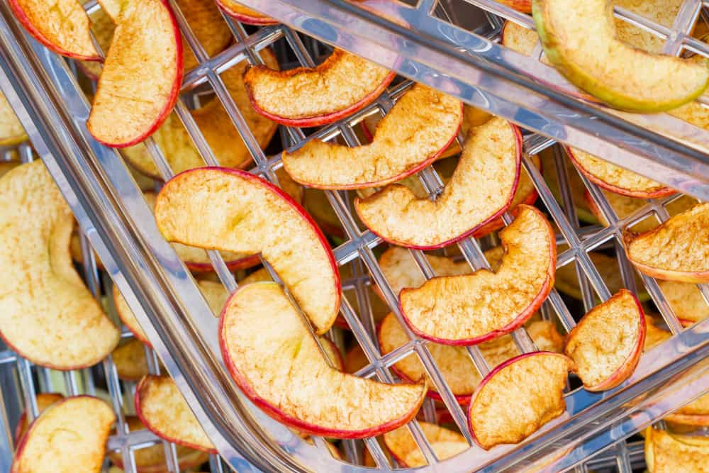 Sliced apples in the food dryer. Cut apples on dehydrator tray.